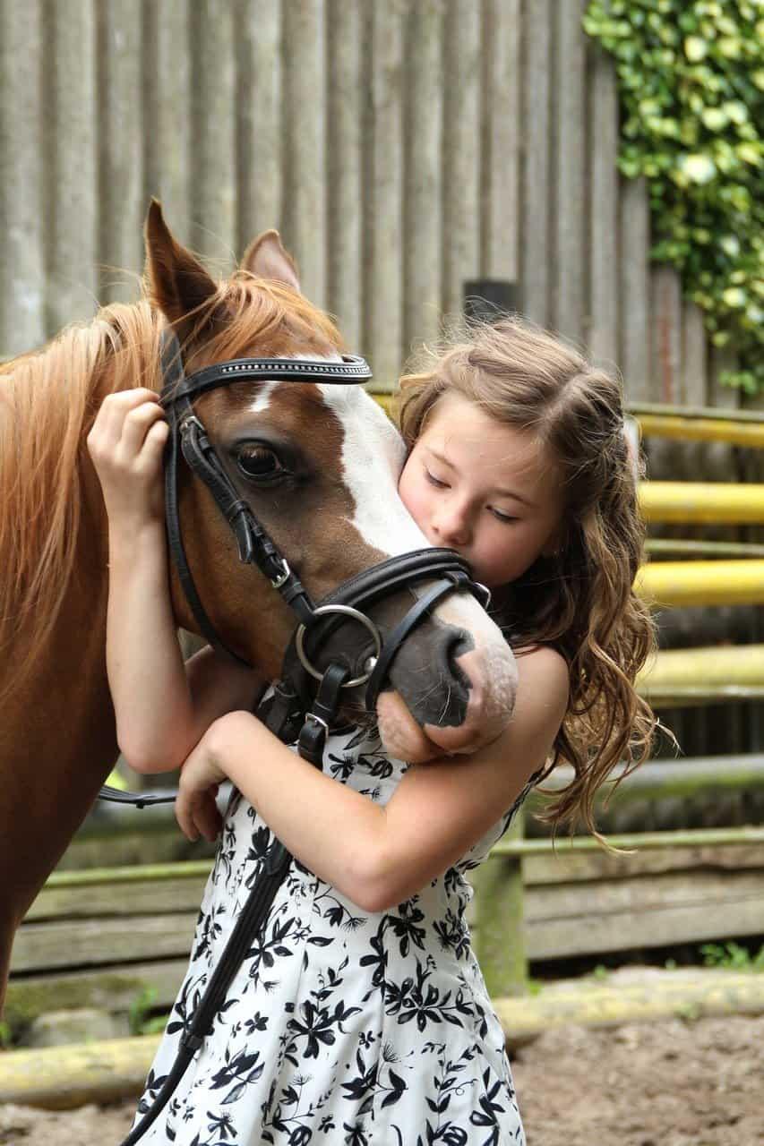 בוק בת מצווה עם סוסים
